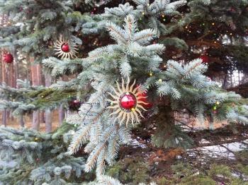 Ziemassvētku egle Saules laukumā